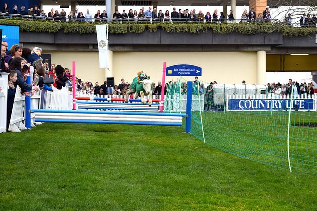 Racing Lambs at Ascot | www.rachelphipps.com @rachelphipps