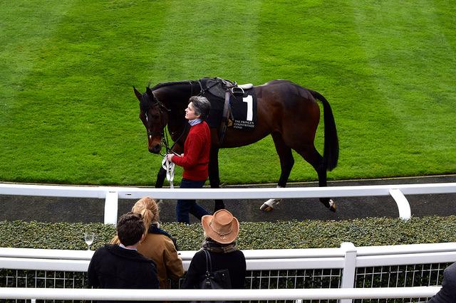 Viewing Horses at Ascot | www.rachelphipps.com @rachelphipps