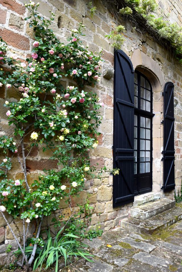 Roses at Chateau de Lissac | www.rachelphipps.com @rachelphipps