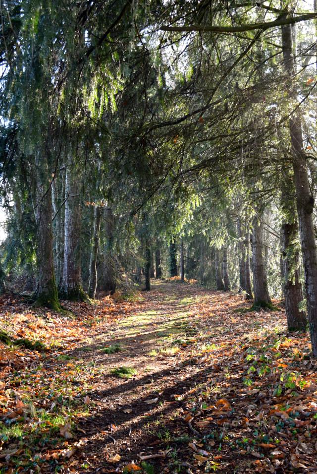 December in Rural Brittany | www.rachelphipps.com @rachelphipps
