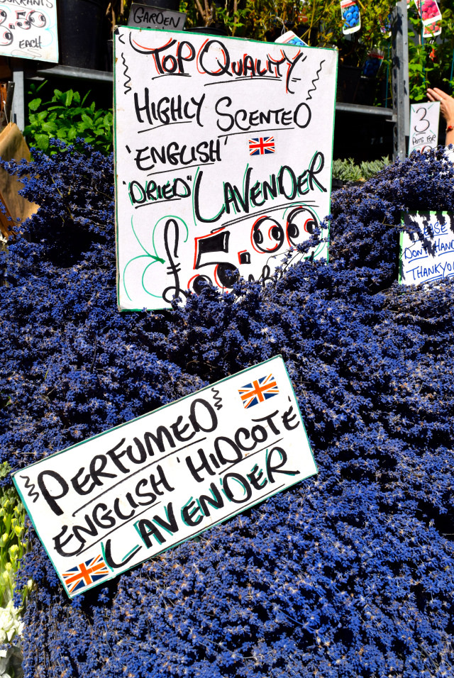 English Lavender at Columbia Road Flower Market | www.rachelphipps.com @rachelphipps