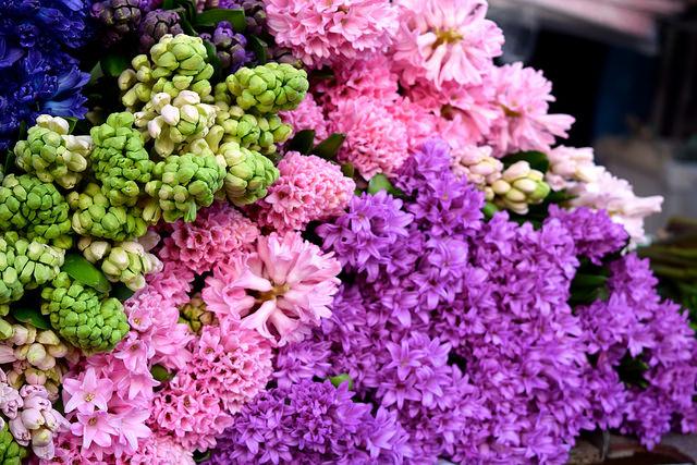 Perfumed Hyacinths at Columbia Road Flower Market | www.rachelphipps.com @rachelphipps