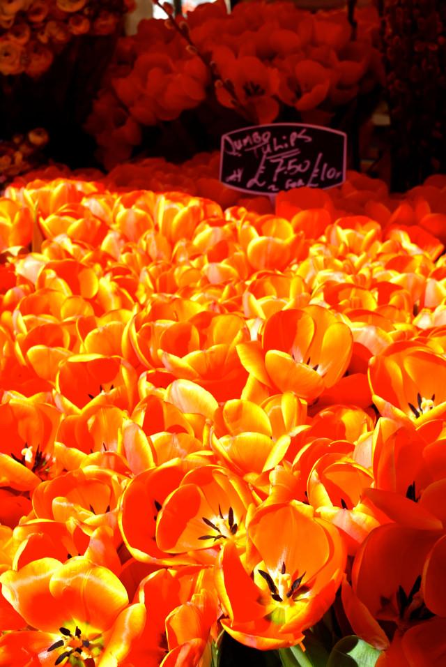 Sun Lit Tulips at Columbia Road Flower Market | www.rachelphipps.com @rachelphipps