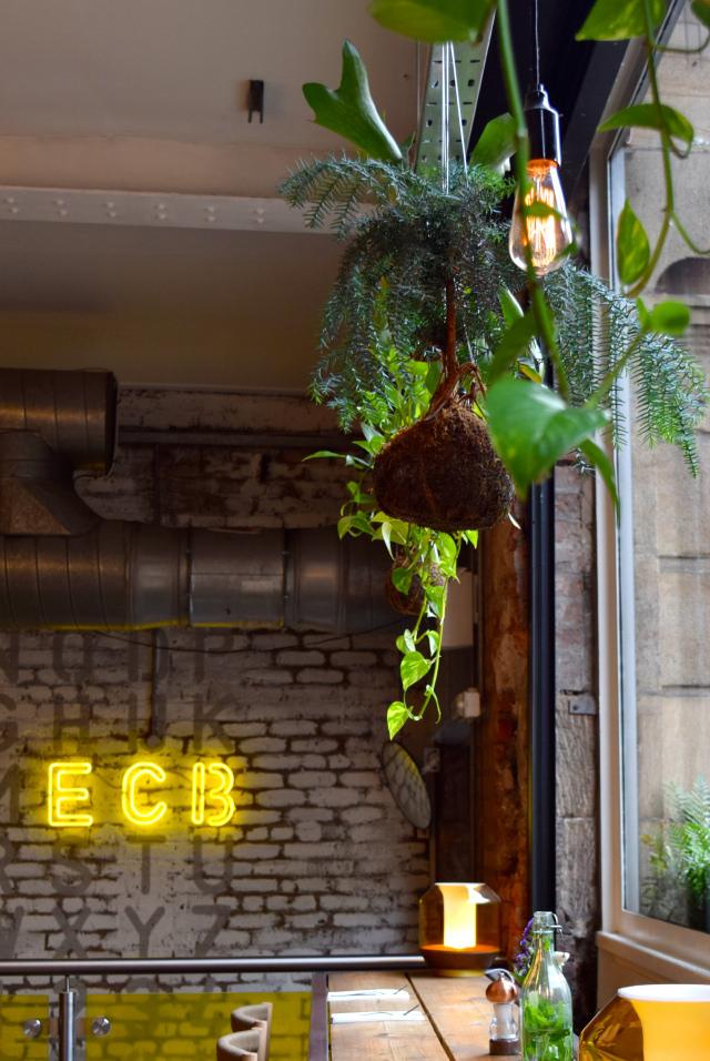 Hanging Plants at Evelyn's, Manchester | www.rachelphipps.com @rachelphipps