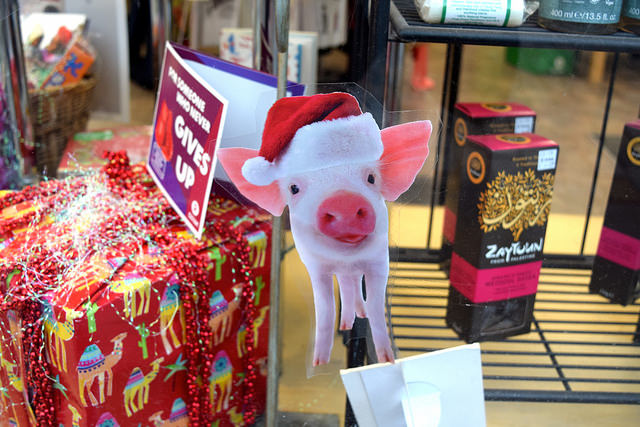 Festive Piglets in Oxfam's Christmas Windows, Canterbury #christmas