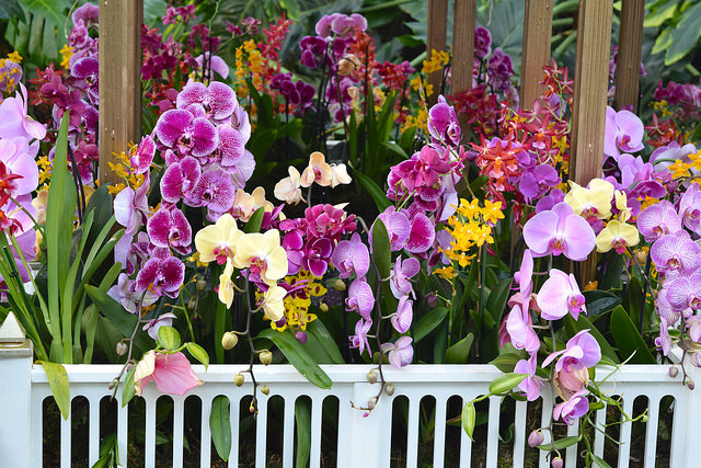 Orchid Display at the Kew Gardens Orchid Festival 2018 #orchids #kewgardens #london