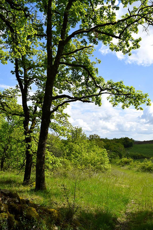 Country Walks Near Manoir de Malagorse, France #travel #france