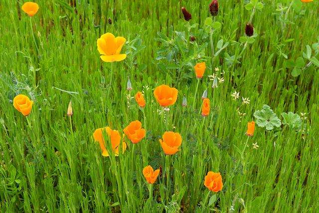 Wild Flowers at the Jardins de Eyrugnac #gardens #eyrugnac #dordogne #france #travel